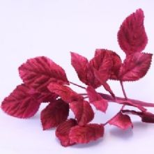 Vintage Fuchsia Velvet Rose Leaves